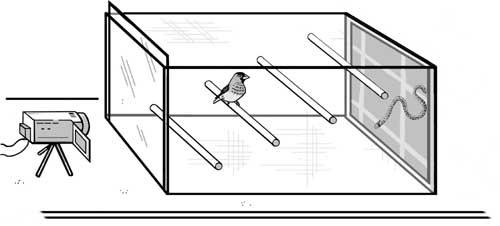 Jaula de experimentación. A la derecha aparece el estímulo en la pantalla TFT. A la izquierda aparece la cámara para el registro del comportamiento.