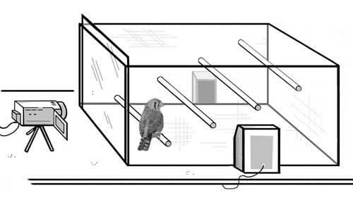 Jaula de experimentación. A ambos lados de la jaula se sitúan los altavoces que producen el estímulo sonoro. A la izquierda aparece la cámara para el registro del comportamiento.