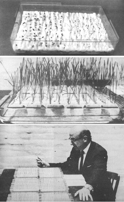 """De arriba a abajo, durante un experimento de bio-PK con crecimiento de semillas de centeno en la Instituto de Parapsicología de la Universidad Católica de Cordoba (circa 1975). Al final de un período, las semillas eran cuidadosamente medidas para comparar con un grupo """"control"""" bajo la hipótesis de que """"el poder de la mente"""" puede influir en su crecimiento."""